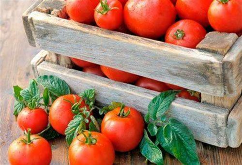 Как сохранить куст помидора до весны. Как сохранить помидоры свежими до весны