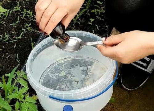 Использование аммиака в огороде. Нашатырный спирт –, как удобрение в саду и огороде