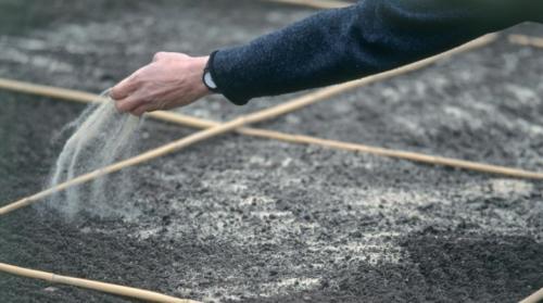 Газонная трава спортивная, как сажать инструкция. Как сеять газонную траву?