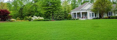 Газон, как сажать и ухаживать. Что такое газон, виды газона, где поместить газонный участок