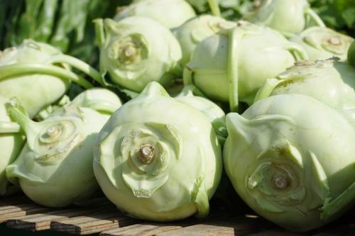 Кольраби -- польза для женщин. Полезные свойства капусты кольраби для организма женщин и мужчин