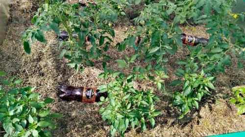 Как разработать целину под огород осенью. Способ №1. Сено.
