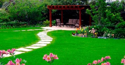 Какую газонную траву лучше посадить. Какой газон лучше посадить на даче: описание и виды трав