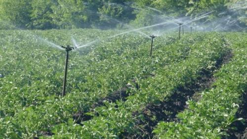 Можно ли поливать картофель холодной водой. Режим полива
