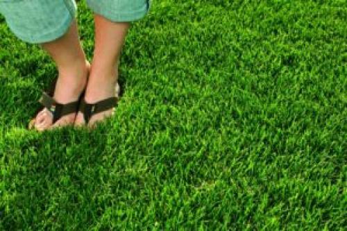Трава для газона вытесняющая сорняки низкорослая. Трава для газона, вытесняющая сорняки