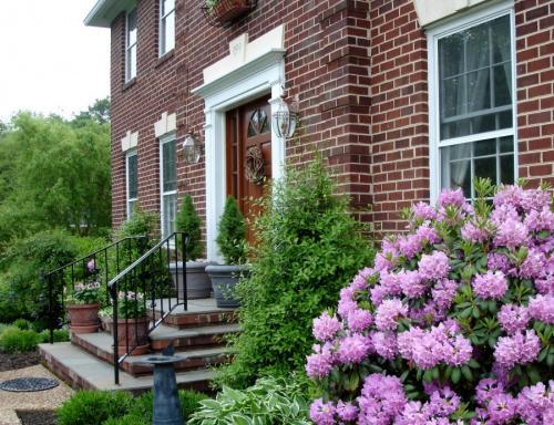 Растения для сада. Декоративные растения — лучшие и самые популярные растения для сада (115 фото)