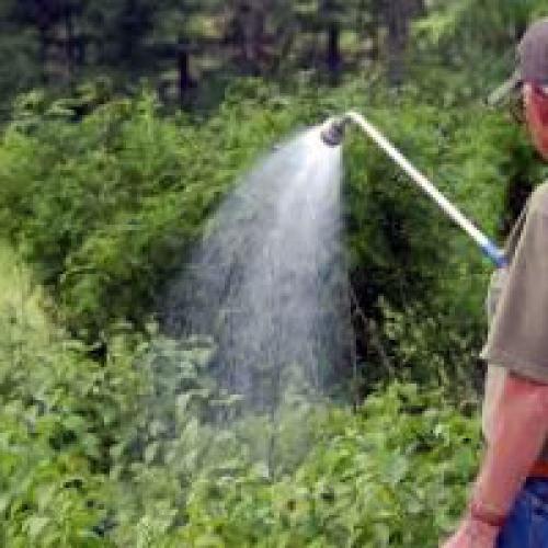 Как часто поливать малину после посадки осенью. Сколько нужно поливать малину