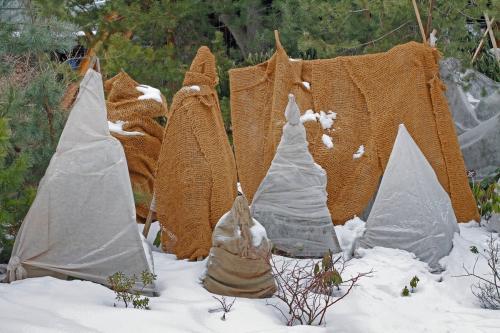 Как укрыть деревья на зиму. Защита плодовых деревьев от заморозков зимой