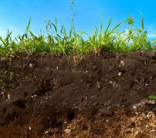 Как разработать дерновую землю. Целина под огород —, как разработать и как перекапывать землю