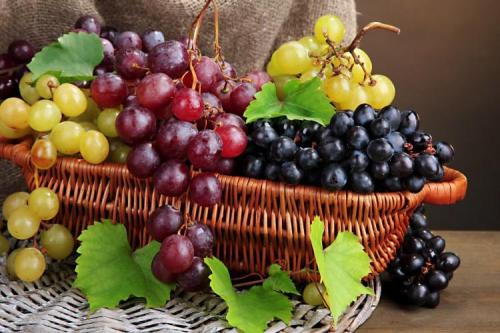 Описание сорта винограда. Лучшие сорта винограда: фото, названия и описания (каталог)